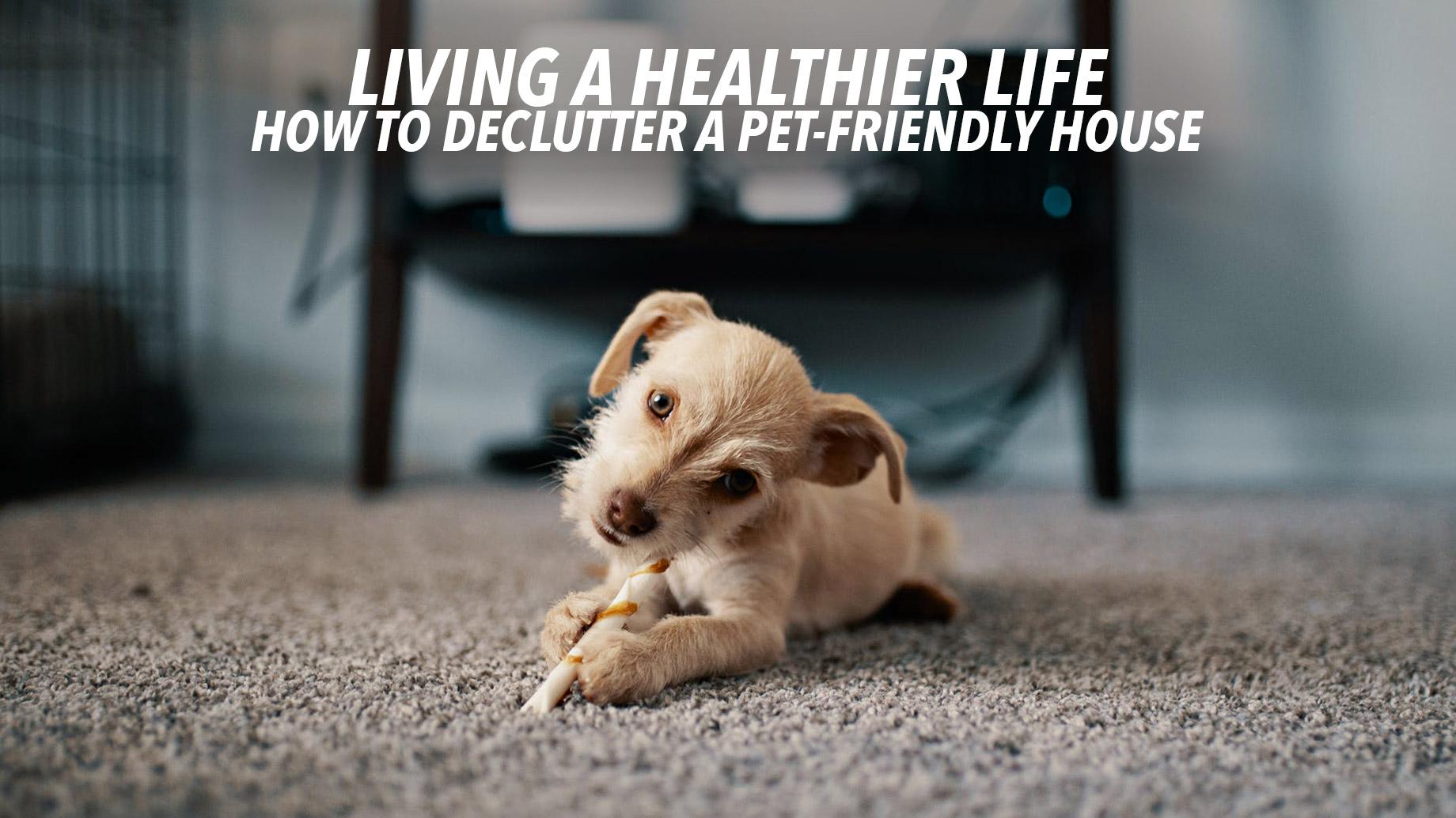Dr. Clo pets